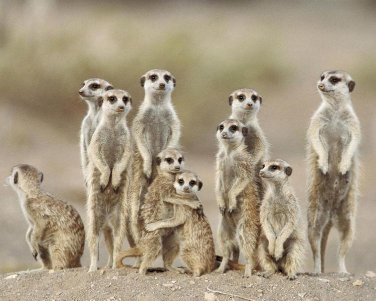 Evoluzione della struttura famigliare