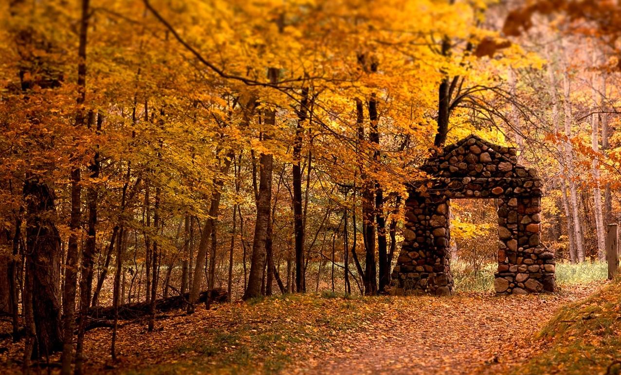 stagione_autunno_foglie